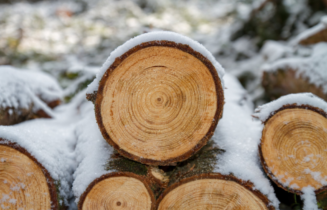companies for logging insurance